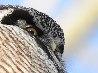 Photograph - Owl Eye by Betty-Anne McDonald