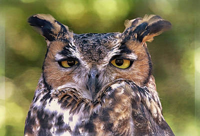 Photograph - Owl Eyes by Elaine Malott