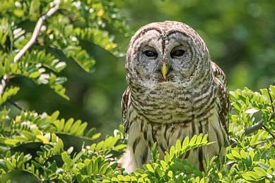 Photograph - Owl Eyes by Linda Shannon Morgan