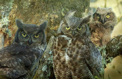 Photograph - Owl Family by Angie Vogel