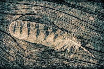 Photograph - Owl Feather On Wood Textures by Dawn Key