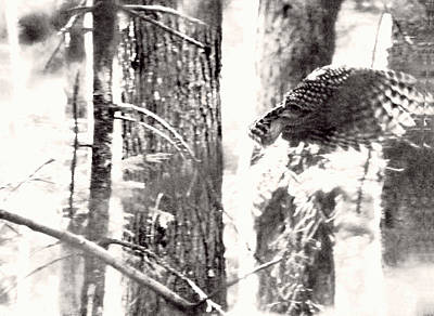 Photograph - Owl Flyby by Kathy Bassett