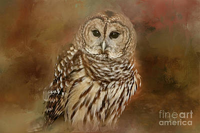 Photograph - Owl by Geraldine DeBoer