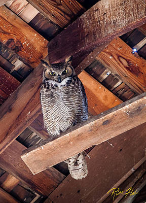 Photograph - Owl In A Barn by Rikk Flohr