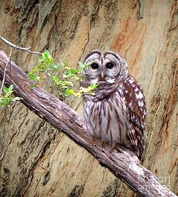 Photograph - Owl In Forest by Pete Trenholm
