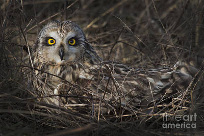 Photograph - Owl In The Grass by Sonya Lang