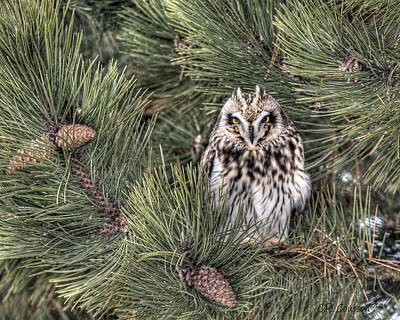 Owl In The Pine Art Print by CR  Courson