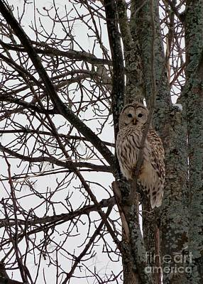 Photograph - Owl In Winter by Claire Bull