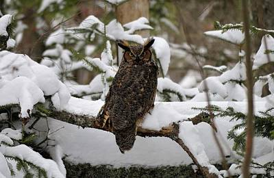 Photograph - Owl by Jewels Blake Hamrick