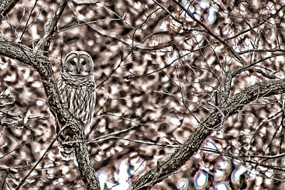 Photograph - Owl Manipulation by Steve Stuller