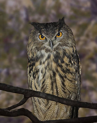 Photograph - Owl by Michele Loftus