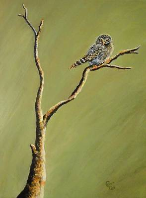 Owl On A Branch Art Print