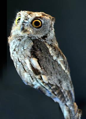 Owl On Black Art Print by Michael Riley