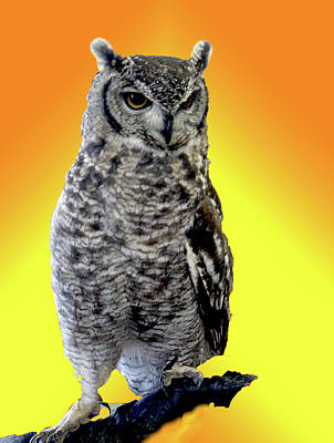 Owl On Branch Art Print by Michael Riley