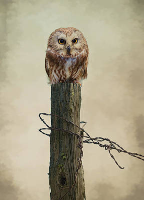 Photograph - Owl On Fence Post by Steve McKinzie