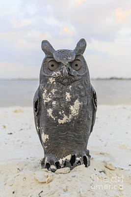 Photograph - Owl On The Beach by Edward Fielding