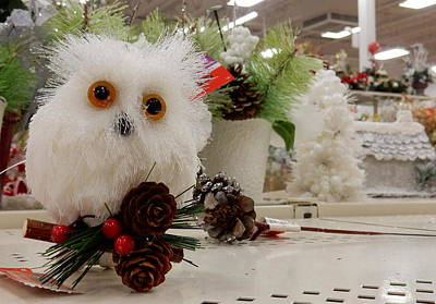 Fake Owl Photograph - Owl On The Shelf by Betty-Anne McDonald