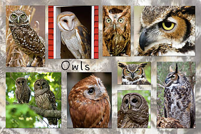 Photograph - Owl Photomontage by Jill Lang