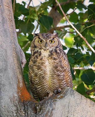 Photograph - Owl Portrait by Loree Johnson