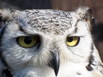 Owl Reflections Art Print