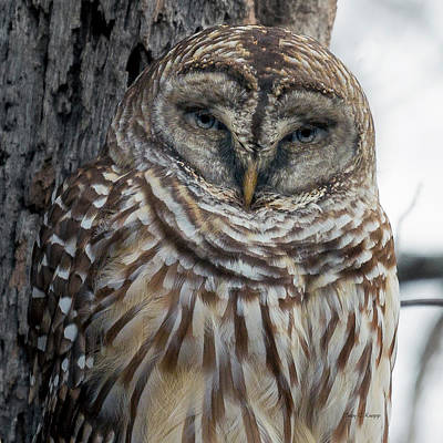 Fantasy Royalty-Free and Rights-Managed Images - Owl See You Soon by Betsy Knapp