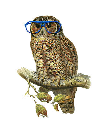 Glass Wall Digital Art - Owl Sitting On A Branch With Blue Glasses by Madame Memento