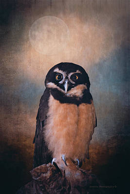 Photograph - Owl Spirit by Maria Angelica Maira