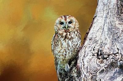 Digital Art - Owl by Suzanne Handel
