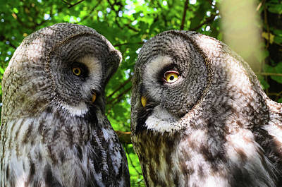 Photograph - Owl Talk by Rainer Kersten