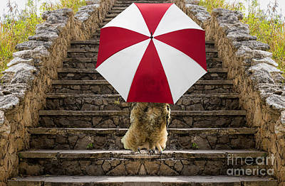 Photograph - Owl With An Umbrella  by Les Palenik