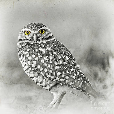 Photograph - Owl Yellow Eyes by Edward Fielding