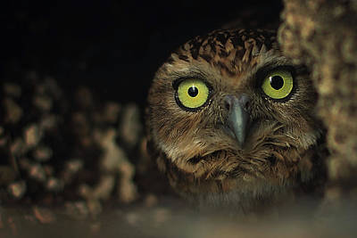 Cave Wall Art - Photograph - Owl by Zoltan Toth
