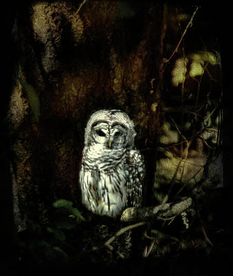 Photograph - When The Owl Sings by Marilyn Wilson