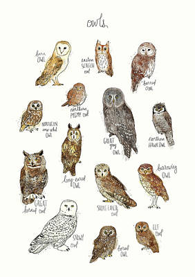 Screech Owl Painting - Owls by Amy Hamilton