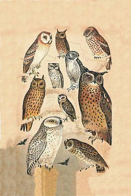 Hawk Mixed Media - Owls by Eric Kempson