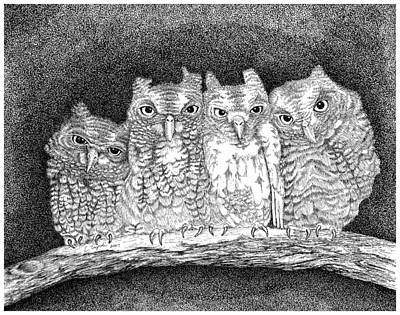 Drawing - Owls by Lawrence Tripoli