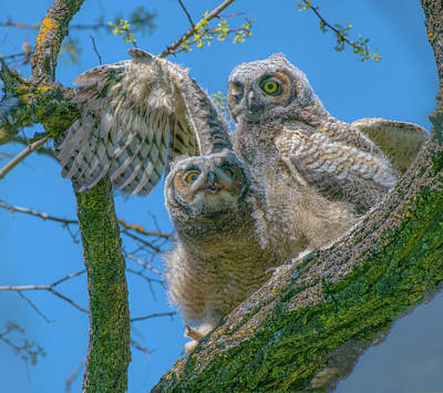 Photograph - Owls by Patricia Dennis