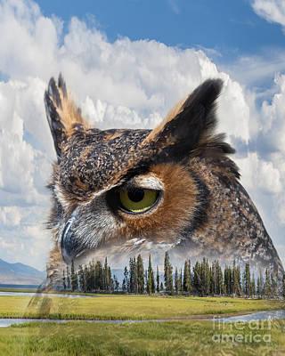 Owl's Rest Art Print