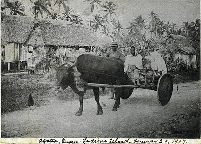 Photograph - Ox Cart Guam 1907 by eGuam Photo