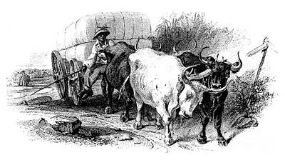 Drawing - Oxen And Cart, 19th Century by Granger