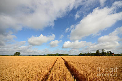 Wheat Photograph - Oxfordshire by Nichola Denny