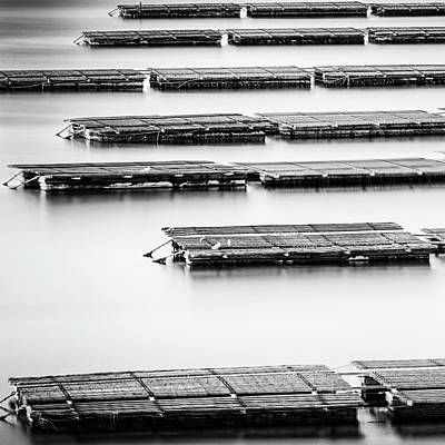 Photograph - Oyster Farm by Tony Locke