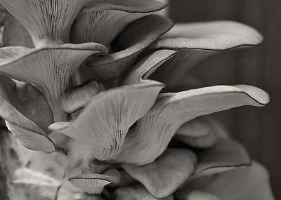 Photograph - Oyster Mushroom Abstract L by Shirley Mitchell