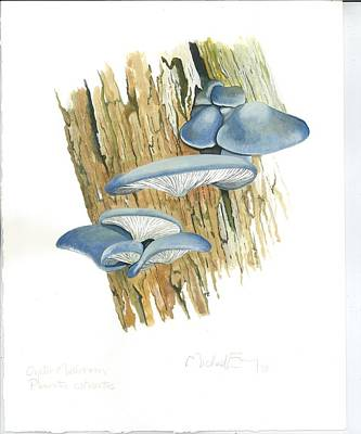 Painting - Oyster Mushroom by Michael Earney