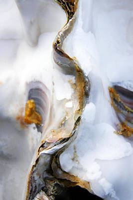 Oyster Photograph - Oyster by Richard George