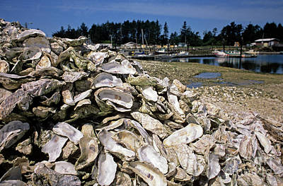 Photograph - Oyster Shells by Jim Corwin