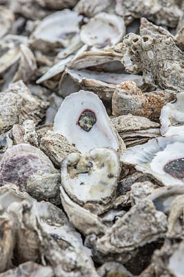 Photograph - Oyster Shells  by John McGraw