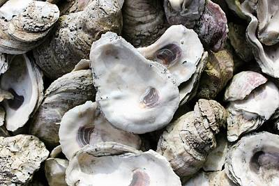 Photograph - Oyster Shells by Patricia Spicuzza