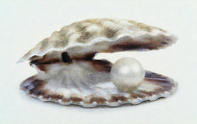 Oyster With Pearl Art Print