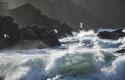 Photograph - Oystercatchers by Barbara Walsh